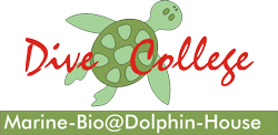 Logo Dive College